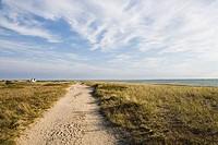 Walkway passing through a landscape, Cape Cod, Massachusetts, USA