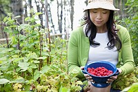 Woman picking raspberries