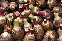 Taro roots on a market, Port Vila, Islands of Vanuatu, Melanesia, South Pacific