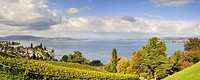 Panoramic view from Arenenberg castle over the vineyards towards Mannenbach and on the western Lake Constance, community Salenstein, Canton Thurgau, S...