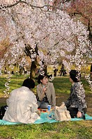 Cherry Blossom Festival at the Kyoto Botanical Garden, picnic under the blossoming tree in Kyoto, Japan, East Asia, Asia