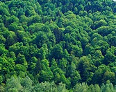 Aerial of a mixed woodland