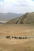 Aerial photograph of a caravan of camels near the modern town of Mitzpe Ramon in the Negev desert