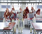 Master butcher trainees, cutting hindquarters of beef to be sent to stores, education center of the Bildungsstelle im Frischezentrum Essen e.V. BiF, E...
