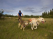Alaskan Huskies, pulling a mountain bike, woman bikejoring, dog sport, dog mushing, dry land sled dog race, Yukon Territory, Canada