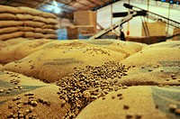 Bags of unroasted coffee beans, Uberlandia, Minas Gerais, Brazil, South America