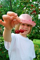 Freshly picked, blond girl with summer hat, 5 years, holding up two cherries with her fingers, sour cherries Prunus cerasus