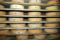Wheels of Swiss Alp cheese in the storehouse of a cheese dairy before the Chästeilet, the dividing of the ceese among the village dairy farmers, Switz...