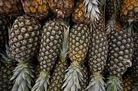 Pineapples, Palmas, Tocantins, Brazil
