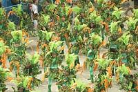 Carnival 2009, School of Samba Viradouro, Rio de Janeiro, Brazil