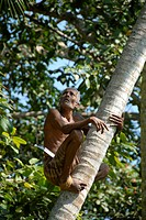 Elderly Singhalese man climbing a coconut tree, Ceylon, Sri Lanka, South Asia, Asia