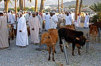Cattle for sale at the cattle market, Nizwa, Sultanate of Oman