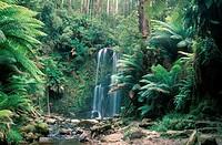 Beauchamp Falls, Australia, Viktoriasee, Otway National Prak