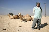 Cameleer in the desert near Awali, Kingdom of Bahrain, Persian Gulf