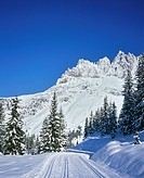 Fir trees, forest, snow_covered winter landscape, fresh snow, cross_country skiing trail, Salzburger Land, Austria
