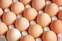 Hen's eggs