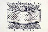 Historic illustration, tablet 4, title Diatomea, name Triceratium, Triceratium pentacrinus, Ernst Haeckel, Kunstformen der Natur, Art Forms in Nature