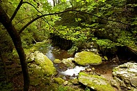 Roaring Fork, Motor Nature Trail, Great Smoky Mtns NP, TN