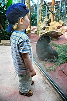 small boy in front of ape enclosure in the zoo, Germany