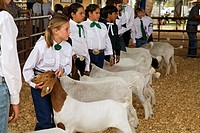 Yuma, Arizona - Children display their goats during 4-H competition at the Yuma County Fair