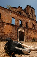 Dog sleeping outside old fort