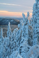 Snowy trees in Koli, Finland.