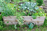 Raised bed / watering can