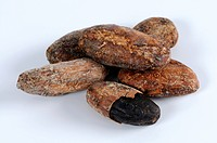 Cocoa beans / Theobroma cacao