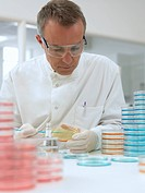 Scientist working with petri dishes (thumbnail)