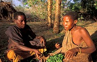 Hadzabe women preparing gathered leaves for food, Tanzania, Lake Eyasi