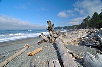 Tree trunks washed up on the beach, Olympic National Park, Washington, USA, North America