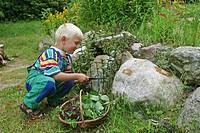 peppermint, hybrid_peppermint Mentha x piperita, Mentha piperita, M. aquatica x M. spicata, boy during harvest