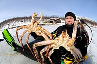 Fjord diver with catch of king crabs, Kirkenes, Finnmark, Lapland, Norway, Scandinavia, Europe
