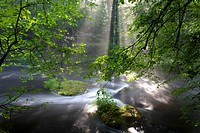 summer mist at the river, Germany, Saxony, Vogtlaendische Schweiz