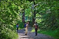 trekking path near Maria Rain, Germany, Bavaria, Allgaeu, Nesselwang