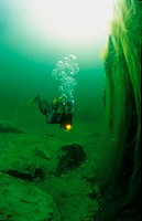 Scuba diver diving next to unusual green algae covering rocks in the middle of the Gosaulacke freshwater lake near Gosau, Upper Austria, Europe