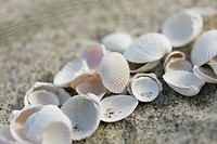 Empty shells on beach