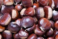 Spanish chestnut, sweet chestnut Castanea sativa, fruit