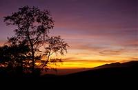 tree, evening sky