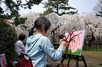 Girl painting cherry blossoms during the cherry blossom festival in an amateur painting group in the Emperor´s Palace park in Kyoto, Japan, Asia