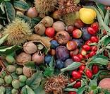 Querformat,Nahrungsmittel,Lebensmittel,Food,Obst,exotische Frucht,exotische Fruechte,Kiwi,Kiwis,Pflanze,Pflanzen,Gehoelz,Gehoelze,Gehoelzpflanze,Gehoe...