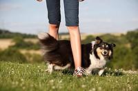 Begleithund,Beschaeftigung,Bewegung,Dog Dancing,Dogdance,einzeln,Huetehund,Kind,Knie antippen,Mensch,Rassehund,seitlich,Sheltie,Shetland Sheepdog,Spas...