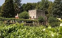 Vineyard  Pontevedra  Galicia  Spain