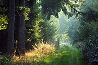 sunbeams on forest path in the morning, Germany, Bavaria, Odenwald
