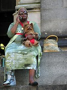 Yorkshire Terrier Canis lupus f. familiaris, Woman with injured foot having a dog on her laps, USA, USA, New York