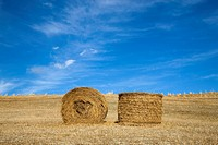 Tuscan landscape, hay bales