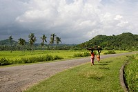 Women wearing colourful clothing carrying rice on their heads and walking past rice fields, paddies near Biraq, Lombok Island, Lesser Sunda Islands, I...