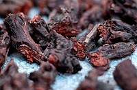 madder Rubia tinctoria, Rubia tinctorum, hackled pieces of the rootstock