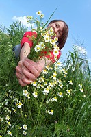 woman with camomile bunch