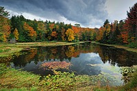 forest lake in autumn, Canada, Ontario, Algonquin Park
